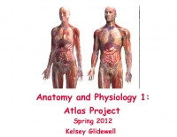 Anatomy and Physiology 1: Atlas Project