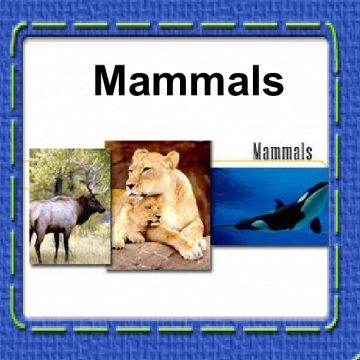 Classifying Plants & Animals