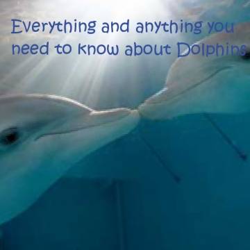 Everything you need to know about Dolphins