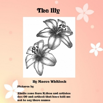 The lily