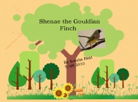 Shenae the Gouldian Finch
