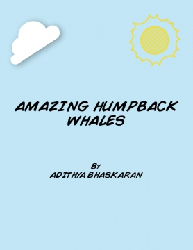 The Amazing Humpback Whales.