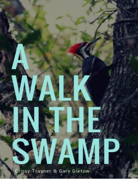 A Walk in the Swamp