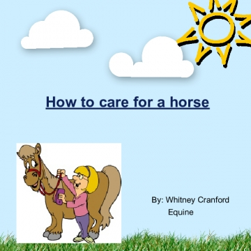 How to care for a horse