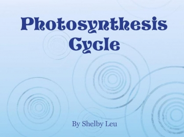 Photosynthesis Cycle