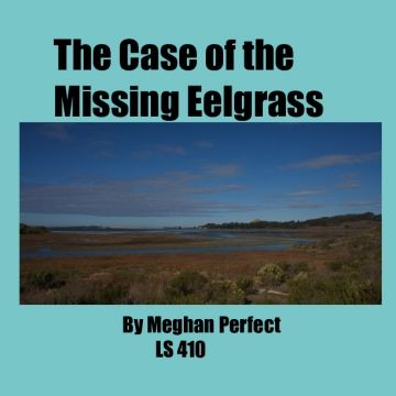 The Case of the Missing Eelgrass