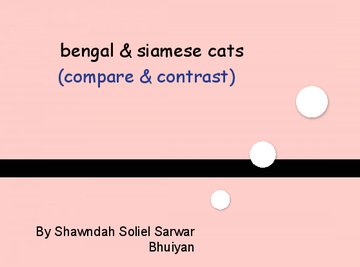bengal cats and siamese cats