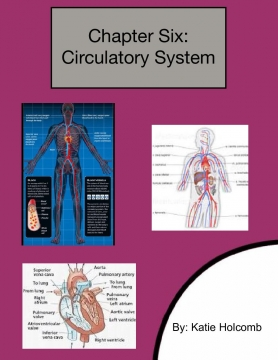 All About The Circulatory System