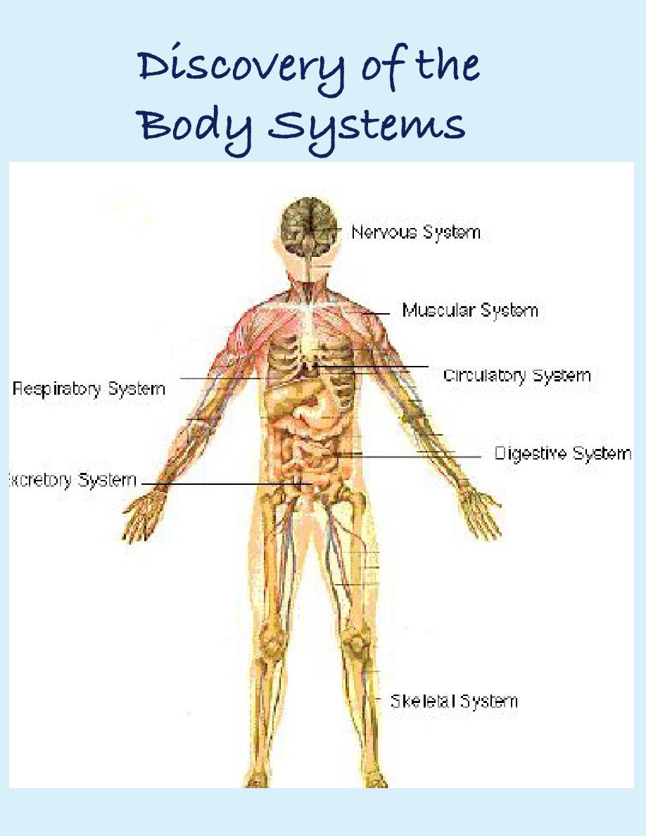 The Body Systems Essay Service