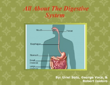 All About The Digestive System
