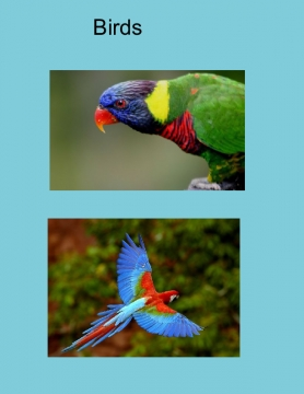 classifying plant and animal