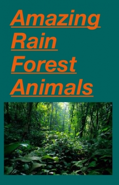 Amazing Rain Forest Animals
