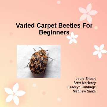 Carpet Beetles For Beginners