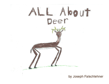 All About Deer