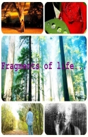 Fragments of life.