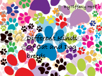 Diffrent Kinds Of Breeds