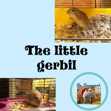 The little gerbil