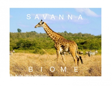Savanna biome