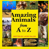 Amazing Animals From A to Z