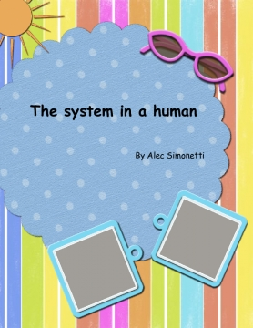 The systems in a human