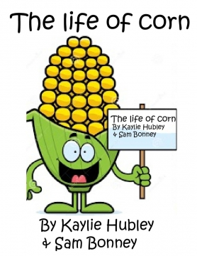 The life of corn