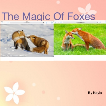 The Magic Of Foxes