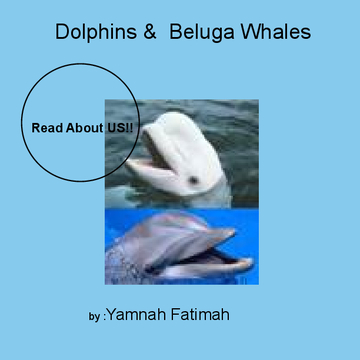 Dolphins & Beluga Whales