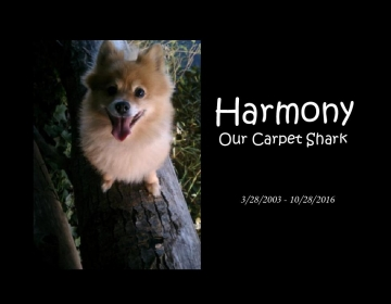 Harmony The Carpet Shark