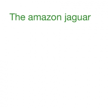 The amazon jaguar
