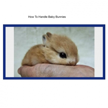 How To. Handle Baby Rabbits