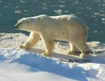 About polar bear