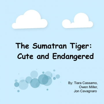 The Sumatran Tiger: Cute and Slowly Dying
