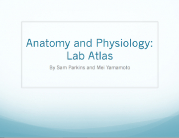 Anatomy and Physiology - Atlas