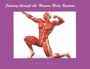 Journey through your Body Systems