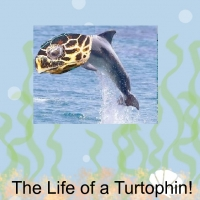 The Life of a Turtophin