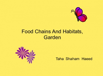 Habitat And Food Chains