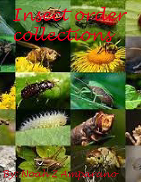 Insect order collections