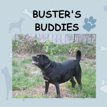 Buster's Buddies