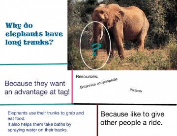 Why about the elephant?