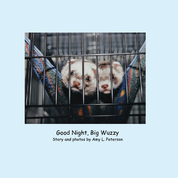Good Night, Big Wuzzy