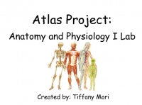 Atlas Project: Anatomy and Physiology I Lab