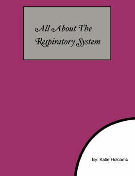 All About The Respiratory System