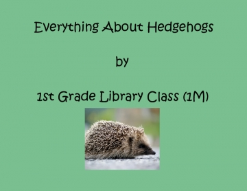 Everything About Hedgehogs