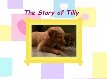 The Story of Tilly