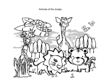Animals of the Jungle