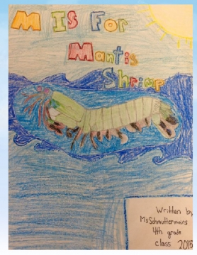 M is for Mantis Shrimp