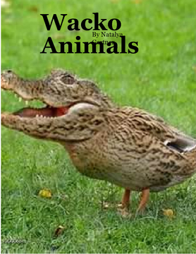 Wacko Animals