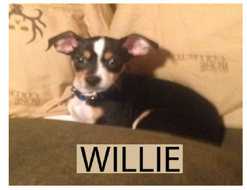 The Life Of Willie