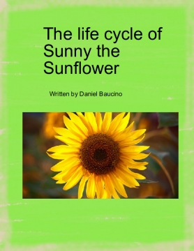 The life cycle of Sunny the  Sunflower
