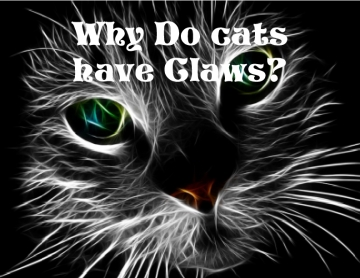 Why do cats have claws?